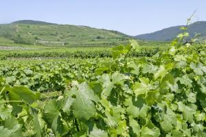 Landhaus Smöch - Aussicht auf Weingärten